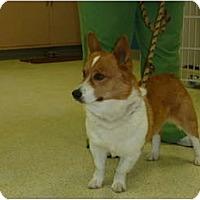 Adopt A Pet :: Trevin - Inola, OK