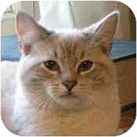 Adopt A Pet :: Emily (& Bobby) - Portland, OR