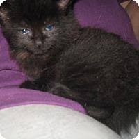 Adopt A Pet :: Little Black Bear and Lady Bug - Dallas, TX
