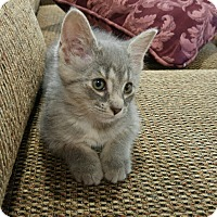 Adopt A Pet :: Sammy - Harrisburg, NC