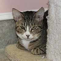 Adopt A Pet :: Poppy - Lunenburg, MA