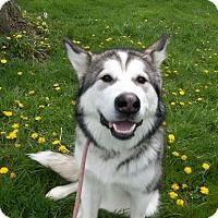 Adopt A Pet :: Odin - Augusta County, VA