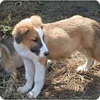 Adopt A Pet :: Colin - Albany, NY