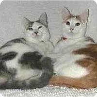 Adopt A Pet :: Freya - Portland, OR