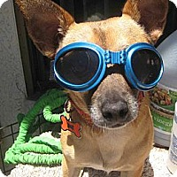 Adopt A Pet :: Paco - Playa Del Rey, CA