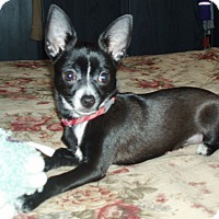 Adopt A Pet :: Lucy - Osseo, MN