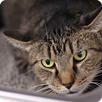 Adopt A Pet :: Jelly Belly - Chicago, IL