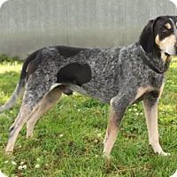 Adopt A Pet :: Hoagie - Salem, NH