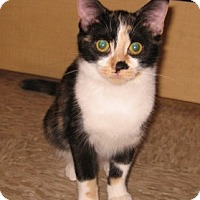 Adopt A Pet :: Smudge - Colmar, PA