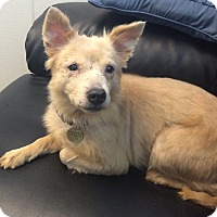 Adopt A Pet :: Brianna - Oak Ridge, NJ