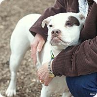 Adopt A Pet :: Hannah - East Hartford, CT