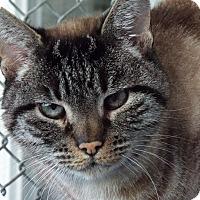 Adopt A Pet :: Wonton - Grants Pass, OR