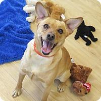Adopt A Pet :: Binx - High Point, NC