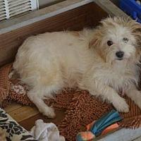 Adopt A Pet :: Ollie - Vacaville, CA