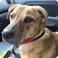 Adopt A Pet :: Spirit - Richmond, VA