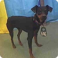 Adopt A Pet :: Aries - Seattle, WA