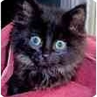 Adopt A Pet :: Meiko - Arlington, VA