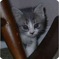 Adopt A Pet :: Flicker - Modesto, CA