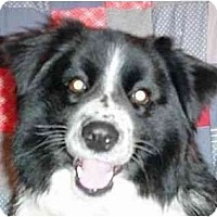 Adopt A Pet :: Sarge--ADOPTED!! - Tiffin, OH