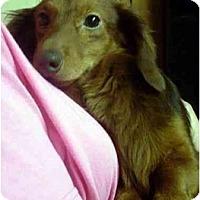Adopt A Pet :: Griswald - Harrison, AR
