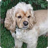 Adopt A Pet :: Duffy - Sugarland, TX