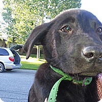 Adopt A Pet :: Sable - Calgary, AB