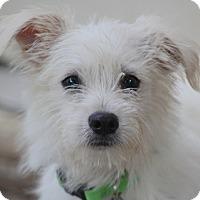 Adopt A Pet :: Bucket - Norwalk, CT