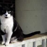 Adopt A Pet :: Leroy aka Kudzu - Wakinsville, GA