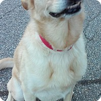 Adopt A Pet :: Captain - Franklin, NH