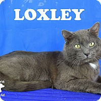Adopt A Pet :: Loxley - Carencro, LA