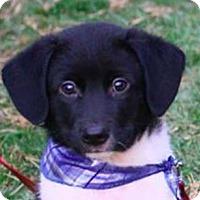 Adopt A Pet :: Luca - San Ramon, CA