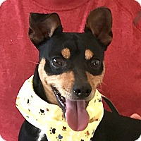 Adopt A Pet :: Frank - Evansville, IN
