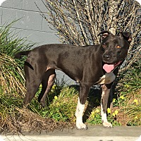 Adopt A Pet :: MAMA - Emeryville, CA