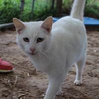 Adopt A Pet :: Jasper - Columbia, TN
