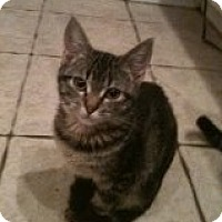 Adopt A Pet :: Abner - Justin, TX