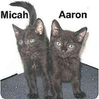 Adopt A Pet :: AARON & MICAH - AUSTIN, TX