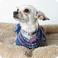 Adopt A Pet :: Sydney - Oakland, CA