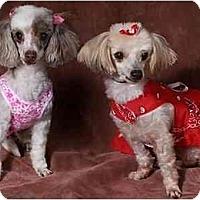 Adopt A Pet :: Missy & Precious - Tallahassee, FL