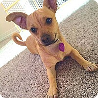 Adopt A Pet :: TYLER - Mission Viejo, CA