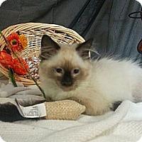 Adopt A Pet :: Keaton - Clearfield, UT