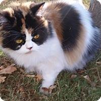 Adopt A Pet :: Queenie - Davis, CA