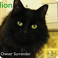 Adopt A Pet :: Stallion - Hamilton, ON