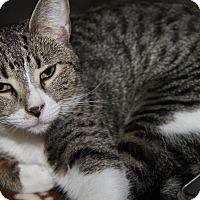 Adopt A Pet :: Dotty - Marietta, OH