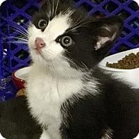 Adopt A Pet :: Shelly - East Brunswick, NJ