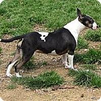 Adopt A Pet :: Sally Ann - Glenwood, AR