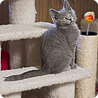 Adopt A Pet :: Arkham - Grand Rapids, MI