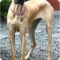 Adopt A Pet :: MAGGIE MAE - Pearl River, NY