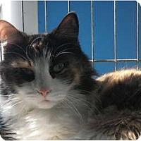 Adopt A Pet :: Flynn - Warren, MI