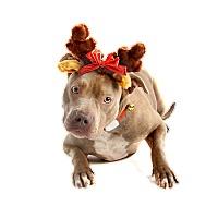 Adopt A Pet :: Georgia - Dallas, TX
