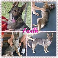 Adopt A Pet :: Faith - Pompano Beach, FL